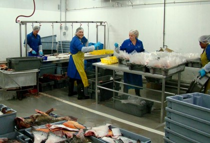 Our crew processes all fish received, that day.  Working well into the night to ensure the quality and freshness of your catch